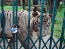 हत्ती सुटले, वाघ कधी?