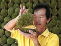 ७० हजार रूपयांना विकलं गेलं जगातलं सर्वात जास्त दुर्गंधी येणारं फळ