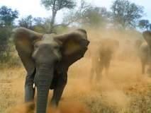 Video: कॅमेरा बघून हत्ती संतापला, पर्यटकांच्या कारवर केला हल्ला!
