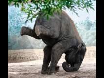 काल माणसांचा योगाभ्यास पाहिलात, आज प्राण्यांची योगासनं पाहा...