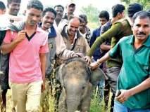 #SHOCKING : सेल्फीच्या नादात गेला हत्तीच्या पिल्लाचा जीव