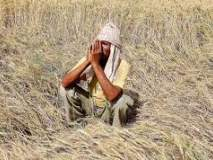 पीक नुकसानाच्या तुलनेत मिळणारी मदत अत्यंत तोकडी;शेतकरी हवालदिल