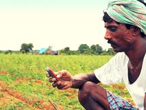सांगली जिल्ह्यातील ६२ हजार शेतकरी कर्जमाफीस अपात्र