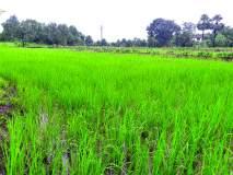 मूल्यवर्धित शेतीसाठी आयआयटी मुंबईची शेतकऱ्यांना साथ