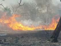 बुलडाण्यातवनविभागाच्या लाकूड आगार परिसरात आग; सागवानची झाडे होरपळली