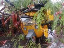 पुण्यात टेम्पोवर झाड कोसळल्याने चालक जखमी