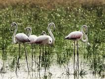 पर्यटनाच्या राजधानीत आहेत ३०० प्रकारचे पक्षी; अजिंठा लेणी परिसरात आहेत सर्वाधिक पक्षी