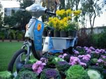 पुष्पोत्सव : 'गुलशनाबाद'मधील फुलांच्या दुनियेची नाशिककरांना मोहिनी...!