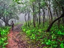 सरळसेवेच्या वनक्षेत्रपाल, सहायक वनसंरक्षकांनी लावला चुना