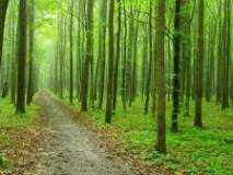 अमरावती विभागात वनशेती उपअभियानांतर्गत ९६.४३ हेक्टर क्षेत्रात वृक्ष लागवड