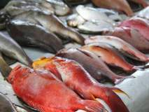 Formalin In Fish : गोव्यात मासळी आयातीवर बंदी