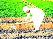 शेतकरी जीवनातील उत्सव तिफन नांदवण