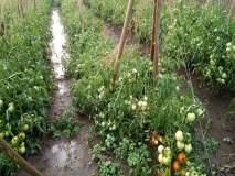 कंधार तालुक्यातील गारपीटग्रस्त शेतकऱ्यांना ५७ लाख ५० हजार मंजूर