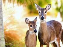 खुडज परिसरात वन्य प्राण्यांचा हैदोस