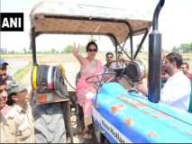 हेमा मालिनींचा हटके प्रचार; शेतात चालविले ट्रॅक्टर