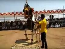 अहमदनगर : अश्व प्रदर्शनात घोड्यांचा लक्षवेधी डान्स