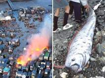 जपानमध्ये पुन्हा एकदा त्सुनामीची चर्चा; या रहस्यमयी माशामुळे वाढली चिंता!