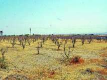 जुन्नरचा पूर्व भाग पाण्याअभावी तहानलेला