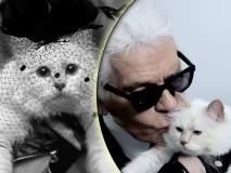 अग्गो बया... 'ही' मांजर होणार २०० मिलियन डॉलर्सची मालकीण?