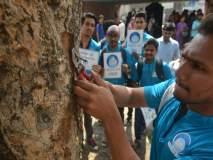 मुंबईत तरुणाईकडून खिळेमुक्त झाडांची मोहीम