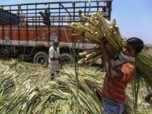 लोकसभेसाठी 'साखर पेरणी'; मोदी सरकारकडून कारखान्यांसाठी 'गोड' बातमी
