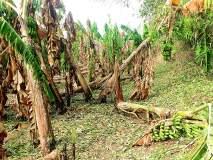 नागपुरात १० हजार हेक्टरवरील पिकांचे नुकसान