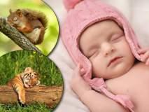खा...प्या... आणि फक्त झोपा... 'हे' जगातील सर्वात जास्त झोपा काढणारे प्राणी!