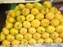 रत्नागिरी : आंबा निर्यात मँगोनेट प्रणालीव्दारे नावनोंदणीसाठी अल्प प्रतिसाद
