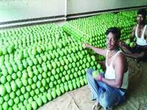 बदलत्या हवामानामुळे हापूस आंबा उत्पादनात घट