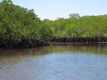 शिवडी-न्हावा-शेवा सी लिंक प्रकल्प : बाधित खारफुटीच्या बदल्यात वनीकरण