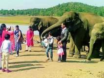 कमलापूरचा हत्ती कॅम्प