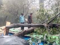 मुसळधार पावसामुळे कुठे घरावर झाड कोसळले तर, कुठे शेती पिकांचे नुकसान झाले