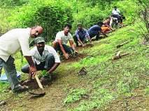 घाटमाथ्यावर वनौषधींची लागवड