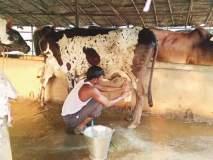 टेळकीत दूधक्रांती गतिमान