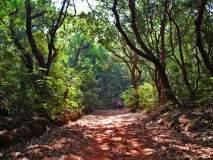युवा दिन विशेष : स्वच्छता, झाडांचे संरक्षण, पर्यावरण संवर्धनासाठी मुंबईतील युवक सरसावले