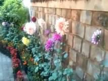 नाशिककर रमले फुलांच्या दुनियेत...