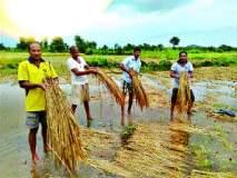 शेतकरी-मच्छीमारांना ओखीचा फटका, २ हजार ३६६.५४ हेक्टर क्षेत्रावर परिणाम