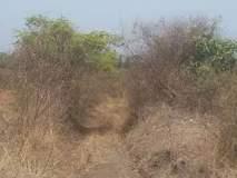 पालकमंत्री शेत, पाणंद रस्ते योजनेसाठी दीड कोटींचा निधी