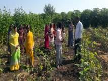 रेशीम उद्योगातून विकासाचा ध्यास; कोल्हावाडीत ३२ महिलांच्या गटाने केली तुतीच्या नर्सरीची स्थापना