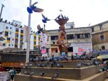 कबूतरांना नागरिकांकडून खाद्याची खैरात; श्वसनाच्या अाजारांना निमंत्रण