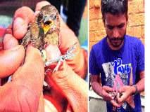 प्राणीमित्रांनी मुक्त केले चिमणीच्या पिलांना - : सांगलीतील घटना