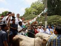 Karnataka Election : बैलगाडीवरून भाषण, सायकलवरून फेरी; कर्नाटकात गाजली 'राहुल की सवारी'