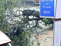 जीर्ण वृक्ष अंगावर कोसळून दुचाकीस्वार जखमी