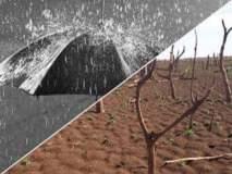 मराठवाडा अजूनही तहानलेला : राज्याच्या १७ जिल्ह्यात अत्यंत कमी पाऊस