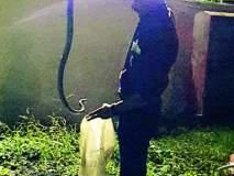 ग्रामीण विकास मंत्री पंकजा मुंडेंच्या कॉटेजमागे सहा फुटाची धामण