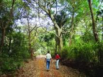 फणसाड अभयारण्यात पर्यटकांचा ओघ, शेकरूंची पाण्यासाठी गर्दी
