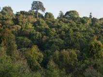 नागपुरातील १२१ हेक्टर जमीन झुडपी जंगलातून मुक्त