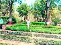 यावल तालुक्यातील ६७ ग्रामपंचायतीना सव्वादोन लाख वृक्ष लागवडीचे उद्दिष्ट्य