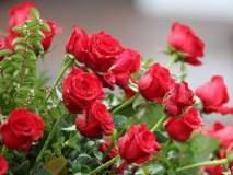व्हॅलेंटाइन डे : गुलाबाच्या फु लांना मागणीवाढली