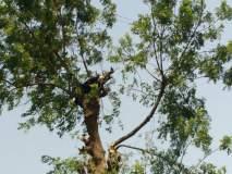 झाडाची फांदी तोडताना विद्युत शॉक लागून शेतमजूराचा मृत्यू